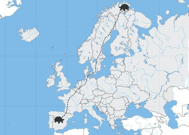Mapa-tortuga.114336